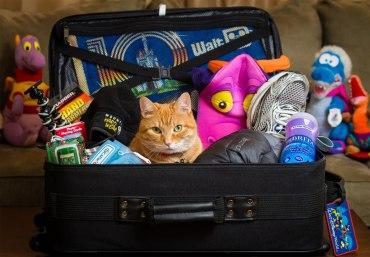 Как правильно упаковать чемодан? Все ли Вы знаете?